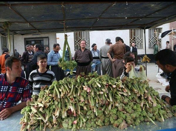 مدارس طبیعت معجزه ای برای نسل آینده گیاهان معجزه گر و کوهستانی در سفره غذایی مردم کردستان