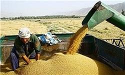 خرید تضمینی ۷.۵ میلیون تن گندم در ۳۱ استان کشور
