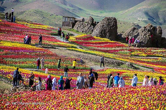 مزرعه گل های لزور